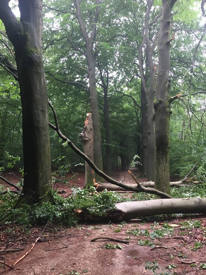 rollator in het bos